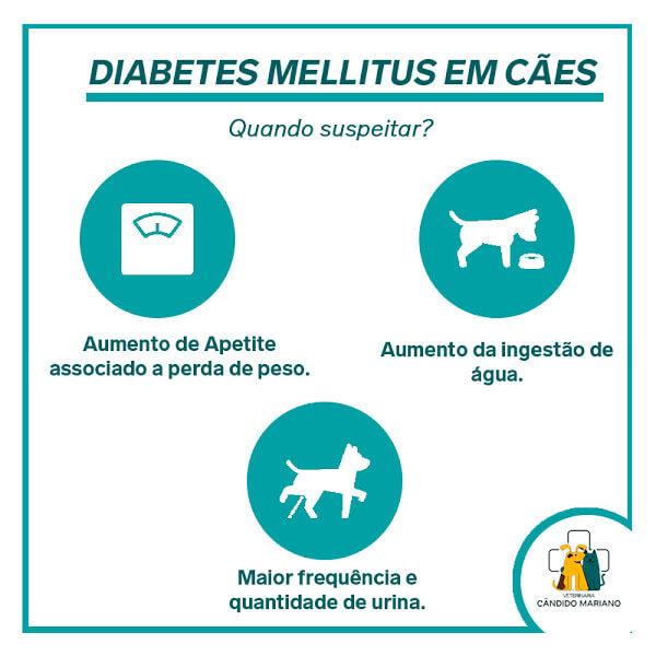 Diabetes Mellitus em cães. Como suspeitar?