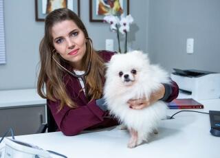 clinica veterinaria consulta veterinaria