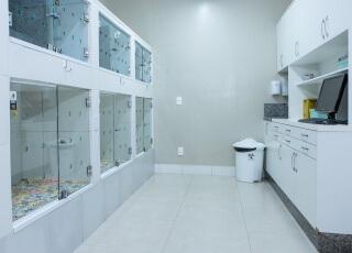 clinica veterinaria internação 24 horas