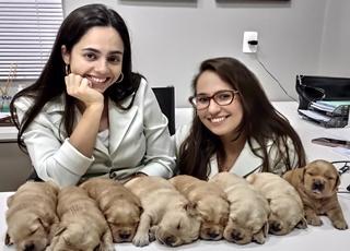 clinica veterinaria vacinas veterinarias